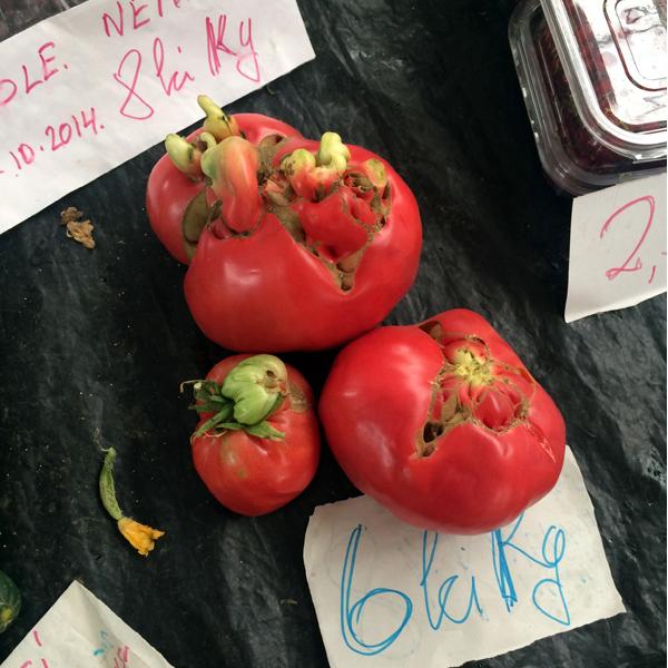 frische Tomaten aus Rumänien